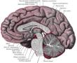 El Edema Cerebral de Altitud puede provocar sangrados cerebrales
