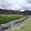 Empiezan los poblados hermosos en la zona del camino Inca. Paradójicamente donde hay poblados el camino Inca original ha sido destruido por ellos mismos, según referían para evitar